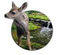 a_deer